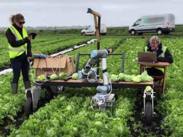 野菜の収穫作業を自動化してくれるVegebot(ベジボット)とは?